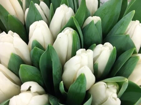 tulip-1201725_1280