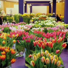 Tulip__700x700_q85_crop