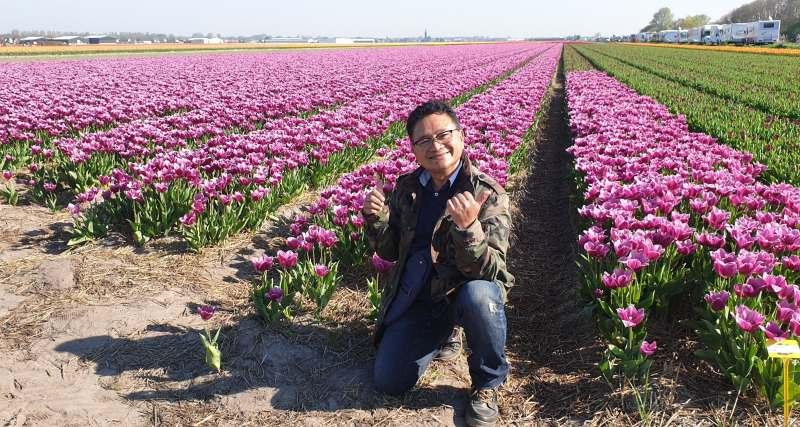 Bunga Tulip, Kembang Tulip, Wisata Musim Semi, Bunga Belanda, Pemandu Indonesia di Belanda