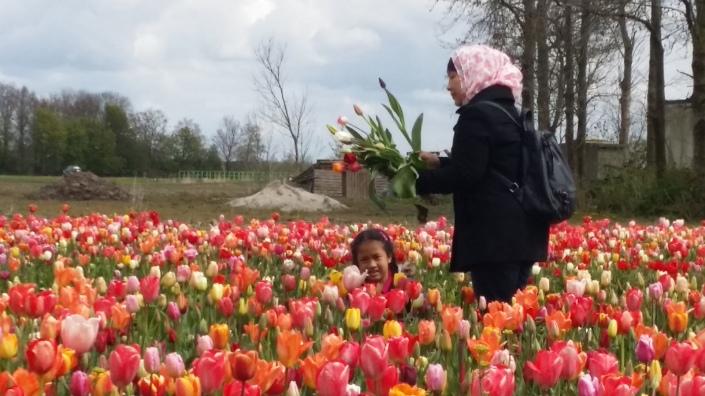 petik_tulip_20160430_132004