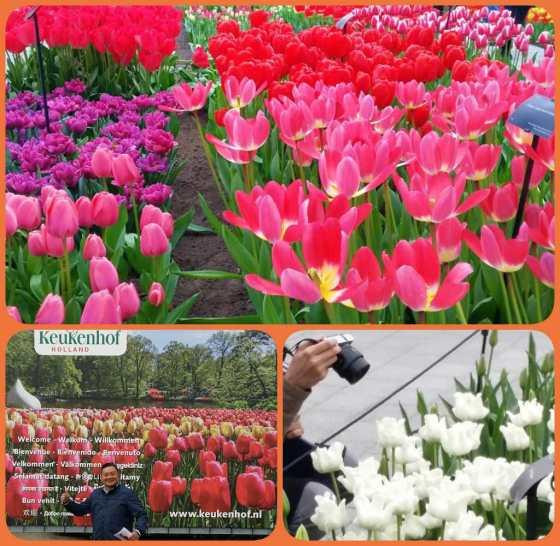 Giethoorn, Keukenhof, Taman Tulip, Liburan Musim Semi