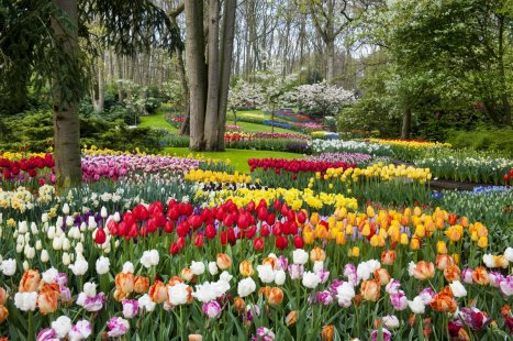 Keukenhof_media_filer_public_thumbnails_filer_public_75_18_75181359-fbd5-4a14-bfb8-e091b889851d_park-053.jpg__1200x1200_q85