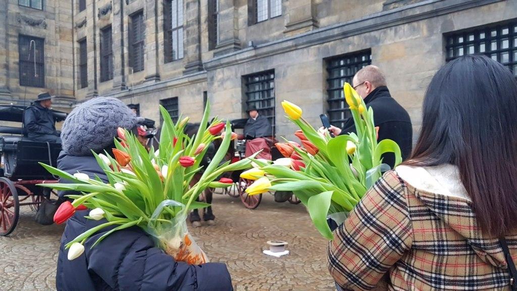 Tulip gratis di Amsterdam.