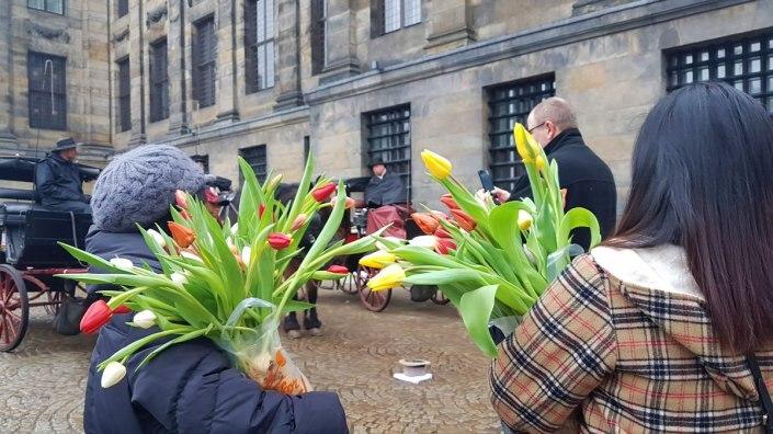 Bunga Tulip, Tulip Gratis di Belanda, Ladang Gratis Tulip, Acara di Amsterdam, De Dam