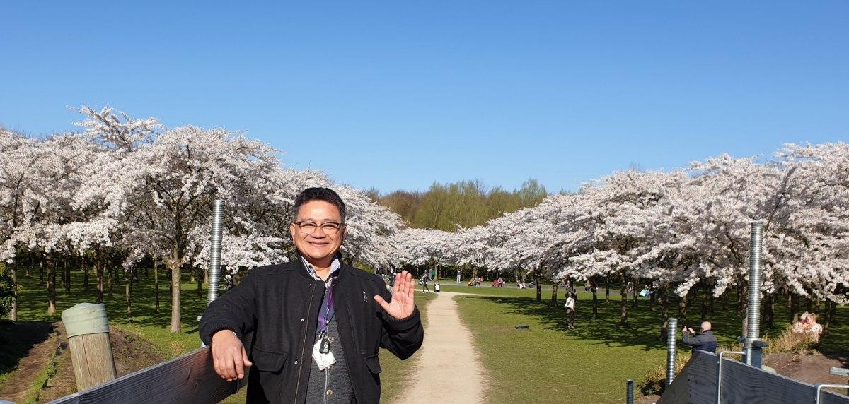 Bunga Sakura, Bunga Jepang, Bunga Ceri, Tampak Cantik Berwarna Putih, Wisata Belanda, Mencari Pemandu Wisata Berpengalaman, Pemandu WNI Ramah