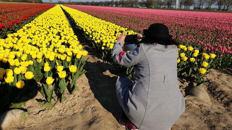 Wisatawan Indonesia menyenangi bunga Tulip, Membuat Foto di Ladang Tulip, Sangat Menyenangkan di Kebon Tulip
