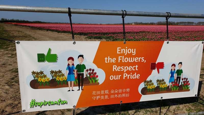 Tetap menjaga keindahan tulip di ladang-ladang Belanda, Jangan menginjak tulip di ladang