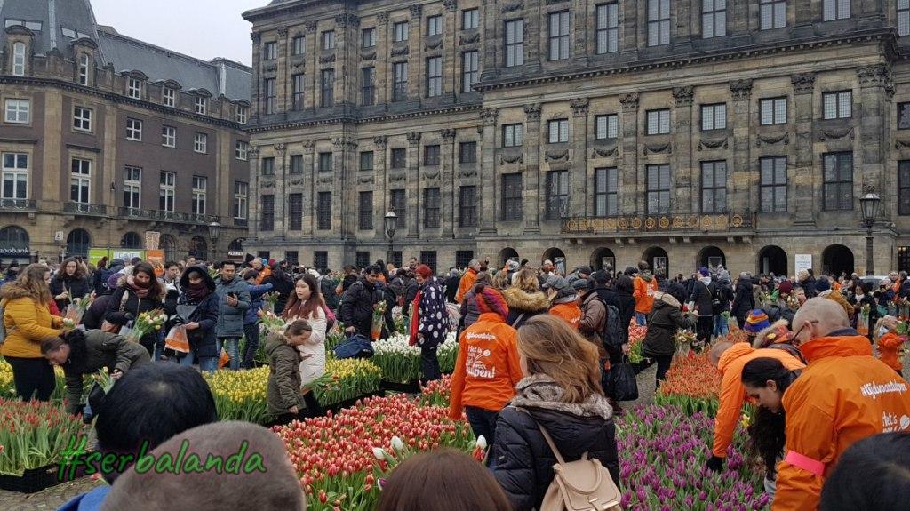 Gratis di Amsterdam, Bunga Gratis, Petik Tulip, Wisata Gratis di Belanda